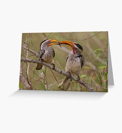 Hornbill Love Greeting Card