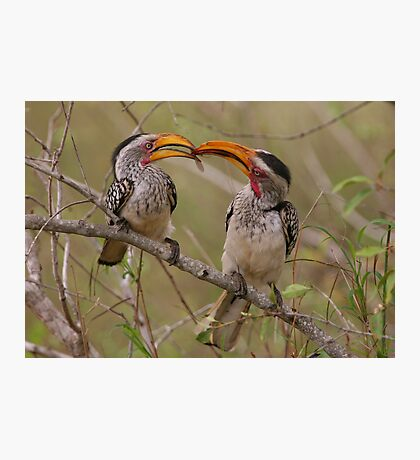 Hornbill Love Photographic Print