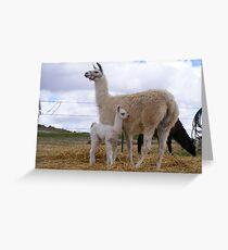 Llama Love Greeting Card