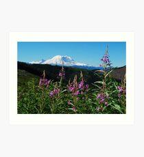 Summer at Mt. Rainier Art Print