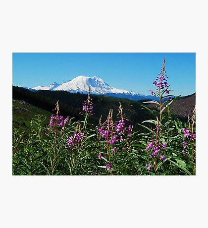 Summer at Mt. Rainier Photographic Print