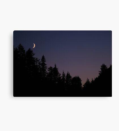 Late Evening  Canvas Print