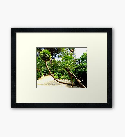 The Palms Of Alfabia..........................Majorca Framed Print