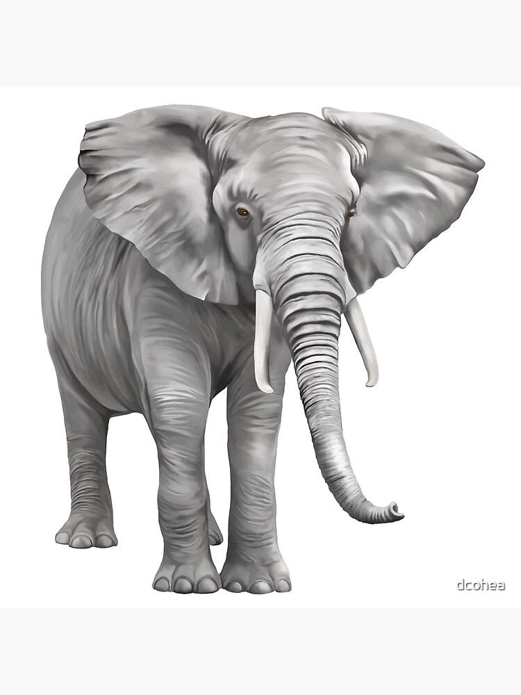 Large Elephant by dcohea