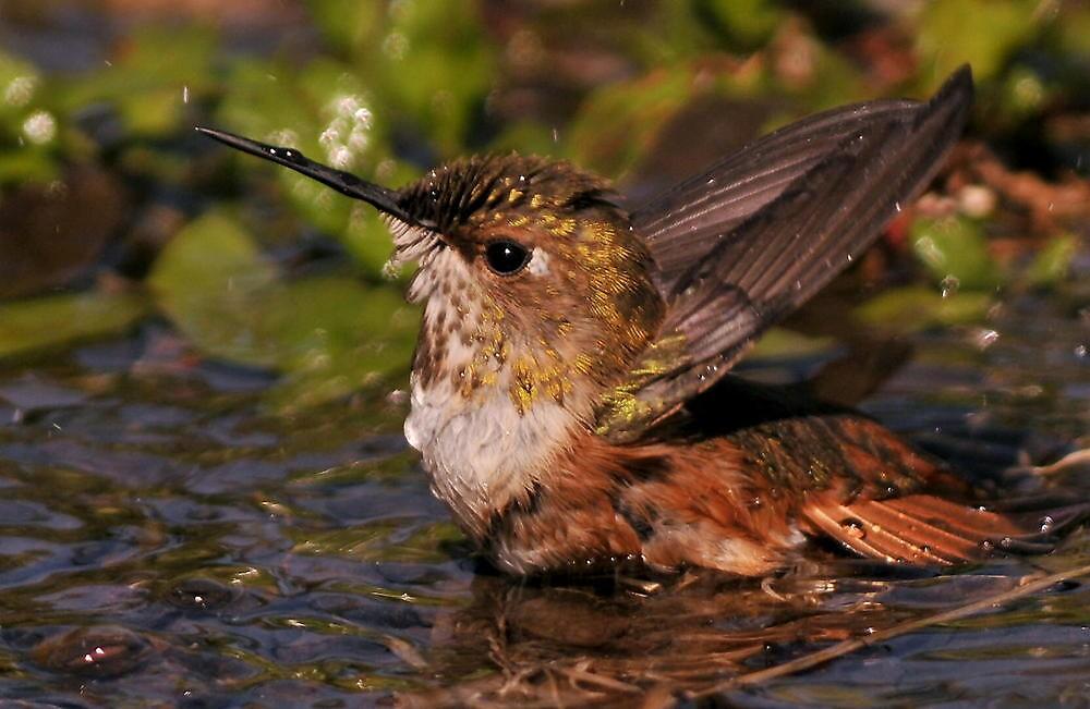 SPLISH ..SPLASH...Taking a Bath~ by RoseMarie747
