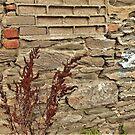 Heide Robinson Wall von Fara