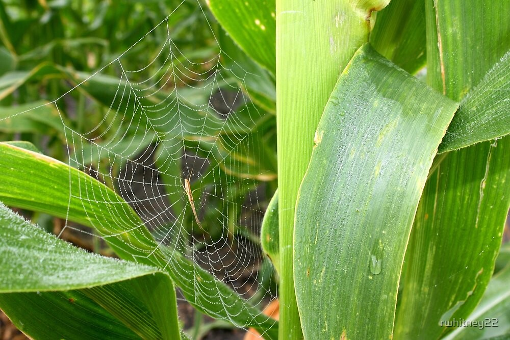 Creepy Crawlies in the Corn by rwhitney22