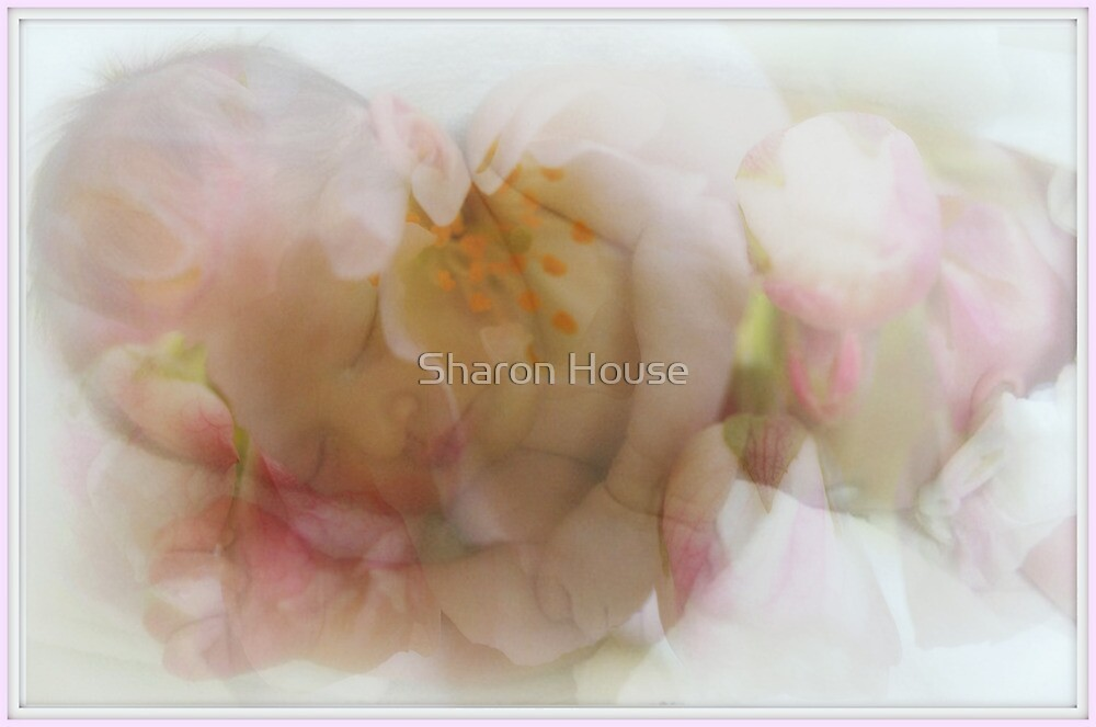 Now I Lay Me.... by Sharon House
