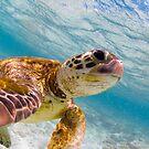 Sea turtle selfie - greeting cards by Kara Murphy