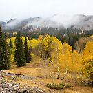 Erstaunlicher Herbst von Valentina Gatewood
