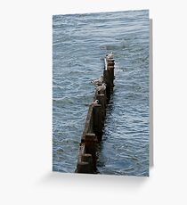 Young Seagulls resting Greeting Card