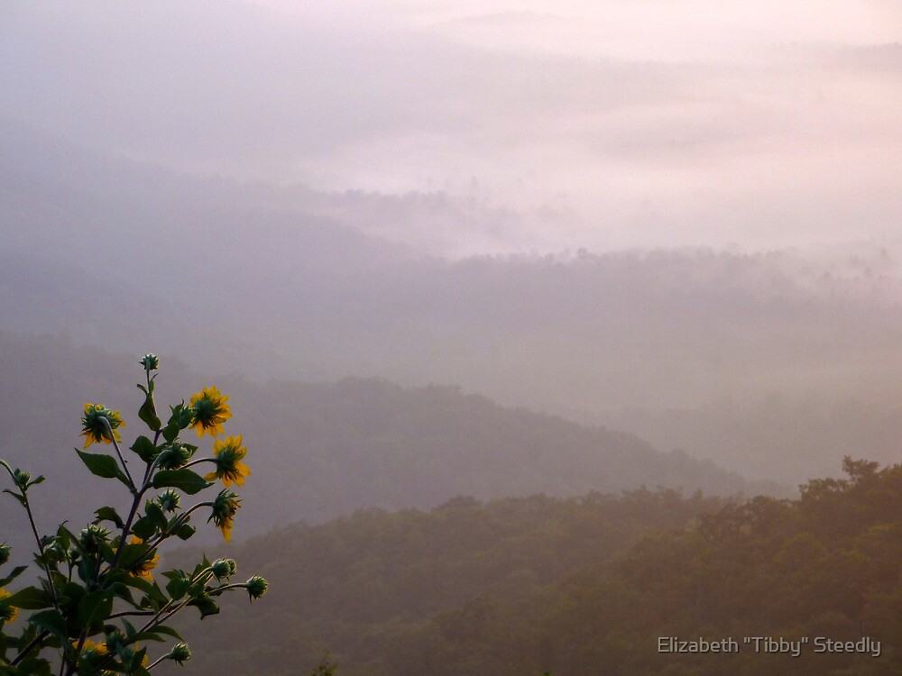 First Light by Tibby Steedly