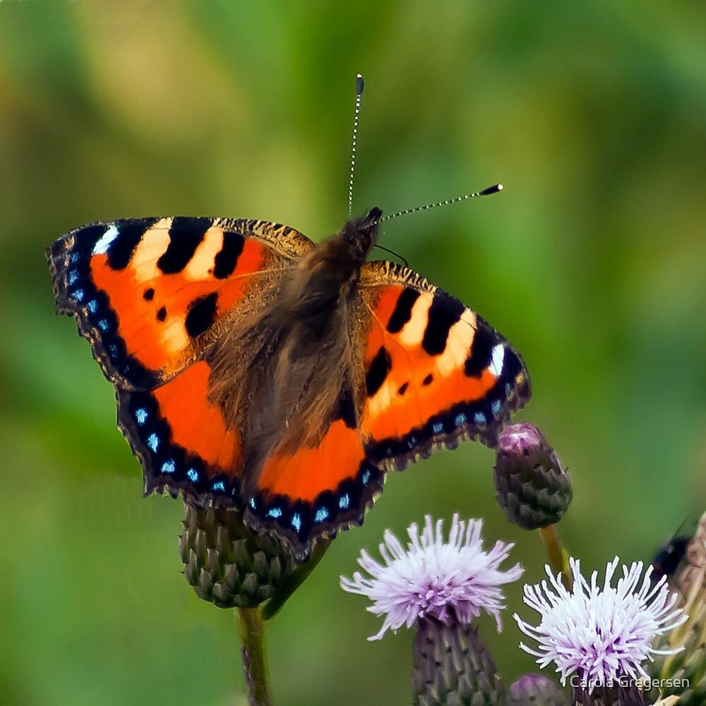 Butterfly by Carola Gregersen
