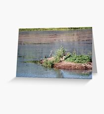 Bird Island- Willow Lake Greeting Card