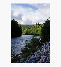 Light on Pines Photographic Print