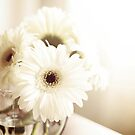 A daisy day by Stacey Still