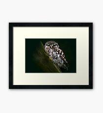 The Little Owl - None Captive Framed Print