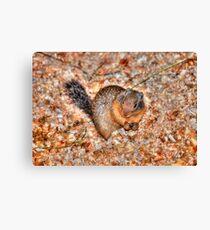 Marmot Munchies Canvas Print