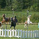 Carousel Farm by Monnie Ryan