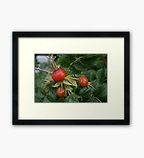 Red fruit. Framed Print