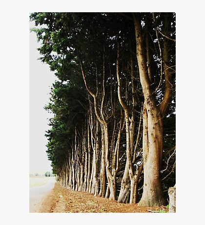 Tree Lined Road Photographic Print