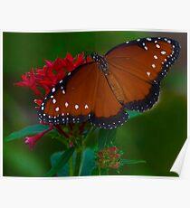 Painted Butterflies Poster