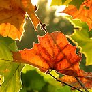 Summer, Silver Linings'  ~ Series Fall colors in August 1of 1 by NatureGreeting Cards ©ccwri