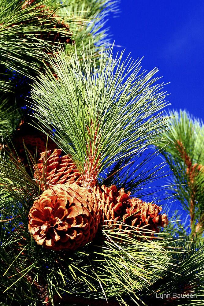 """""""Ponderosa Pine"""" by Lynn Bawden"""