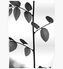 Stems And Leaves Poster
