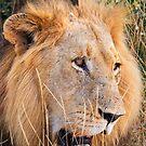 Kruger King by Scott Carr