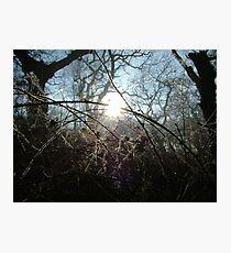 Icy Brambles Photographic Print