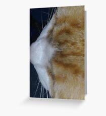 Cuddles - close up Greeting Card