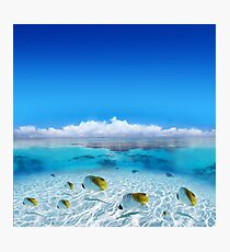 Post Card from Polynesian   Photographic Print