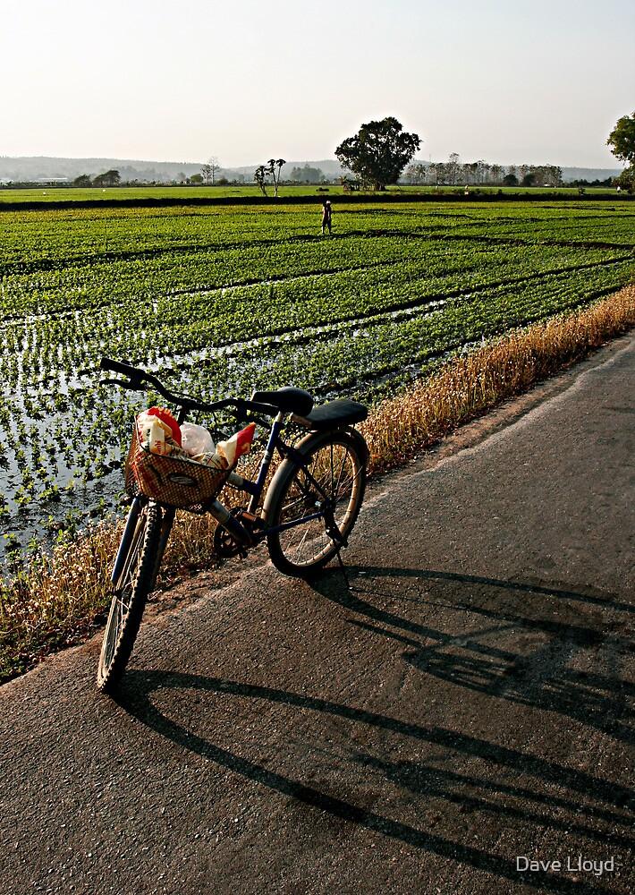 The Bike by Dave Lloyd