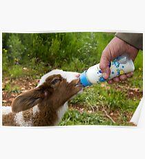 Hand feeding Poster