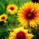 Maler-Blume von Gourmetkater