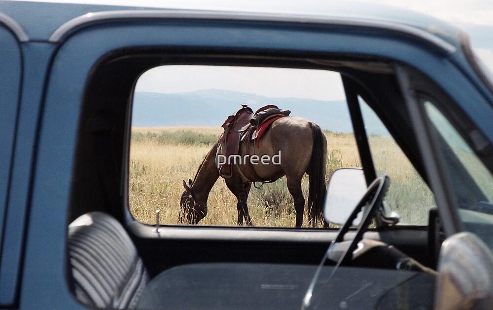 Grazin' by pmreed