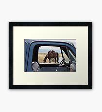Grazin' Framed Print