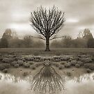 mirrored reality by Dave Milnes