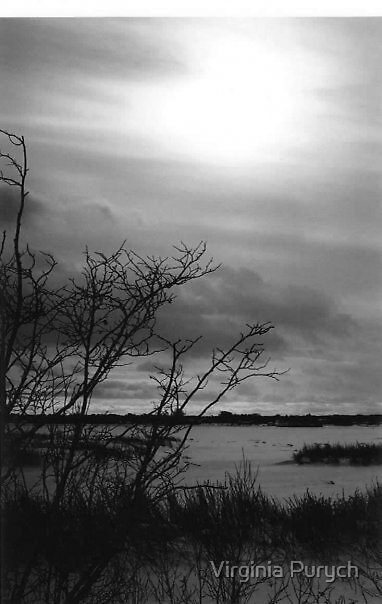 Dismal Days by Virginia Purych