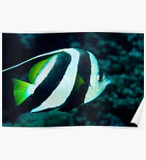 Banner Fish Poster