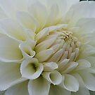 Dewy White by Monnie Ryan