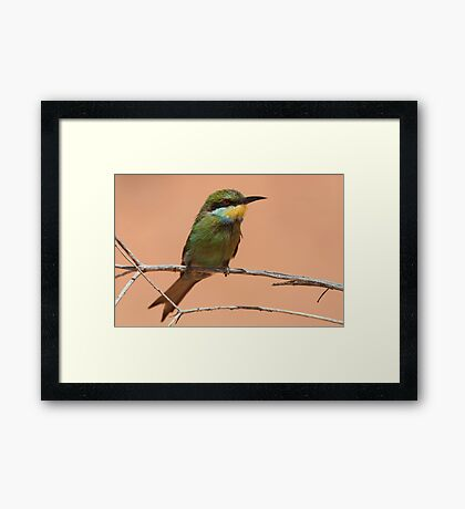 Swallow-tailed Bee-eater Framed Print