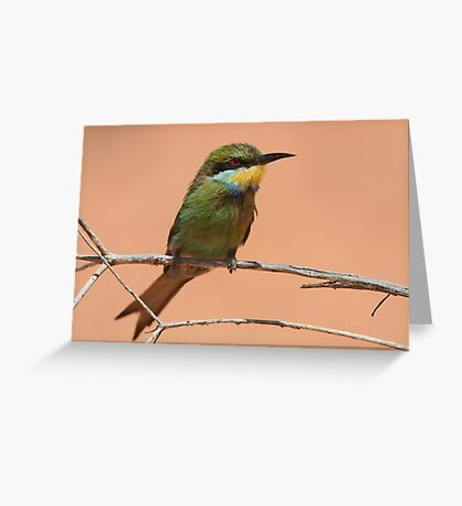 Swallow-tailed Bee-eater Greeting Card