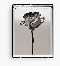 carnation Canvas Print