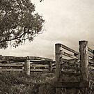Cattleyard by pennyswork