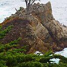 Die einsame Zypresse von Margaret Stevens