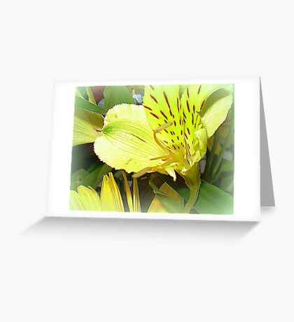 Alstromeria - Sweet and dainty on table  Greeting Card