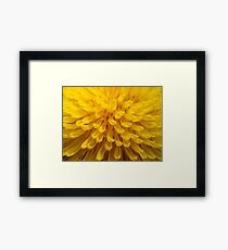 Sunny D.  Framed Print