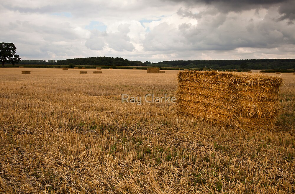Harvested by Ray Clarke